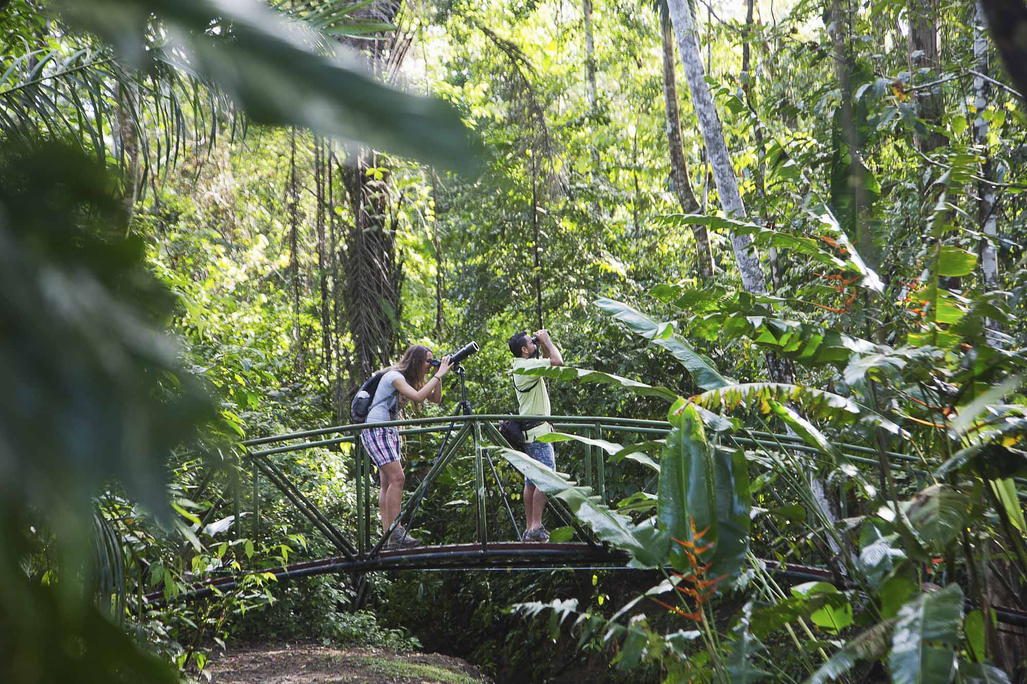 Costa Rica, Peninsula de Osa, Osa Peninsula, Danta Corcovado Lodge, Naturreservat, Vogel Beobachtungs-Tour
