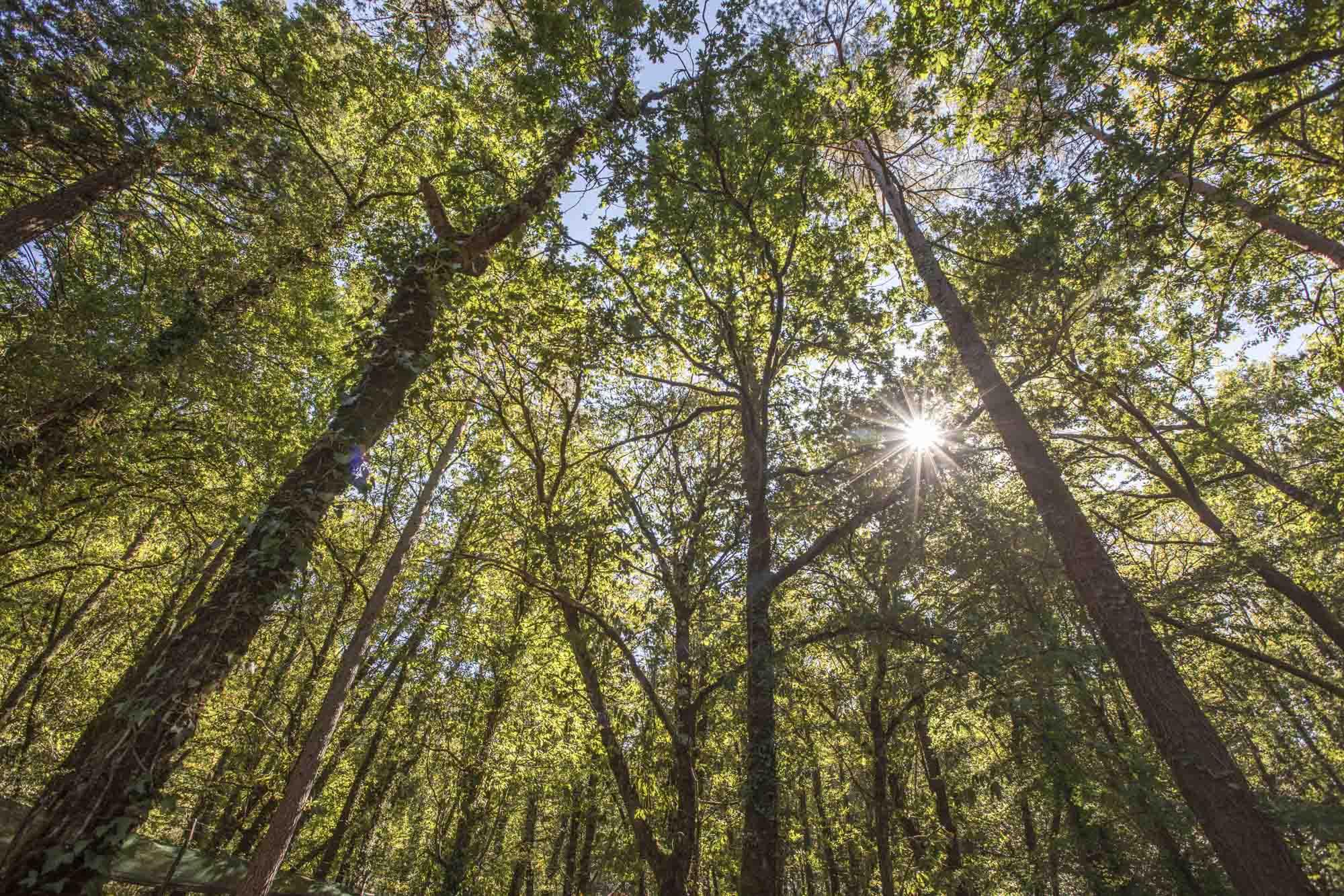 Portugal, Nord-Portugal, Parque Nacional da Peneda Gerês, Nationalpark, Serra do Geres, Wald