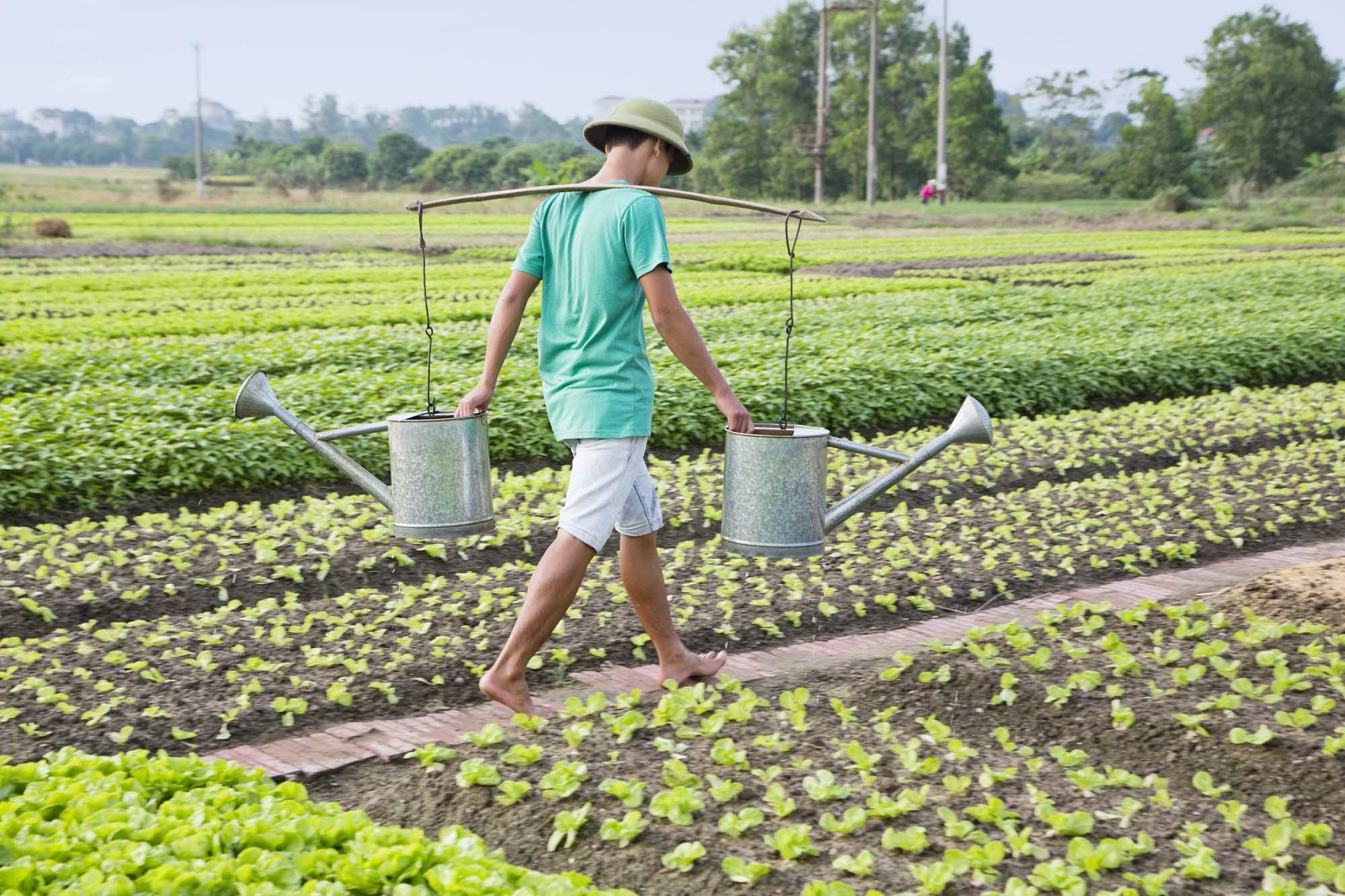 Asien, Vietnam, Hoi An, Landwirtschaft, Gärten