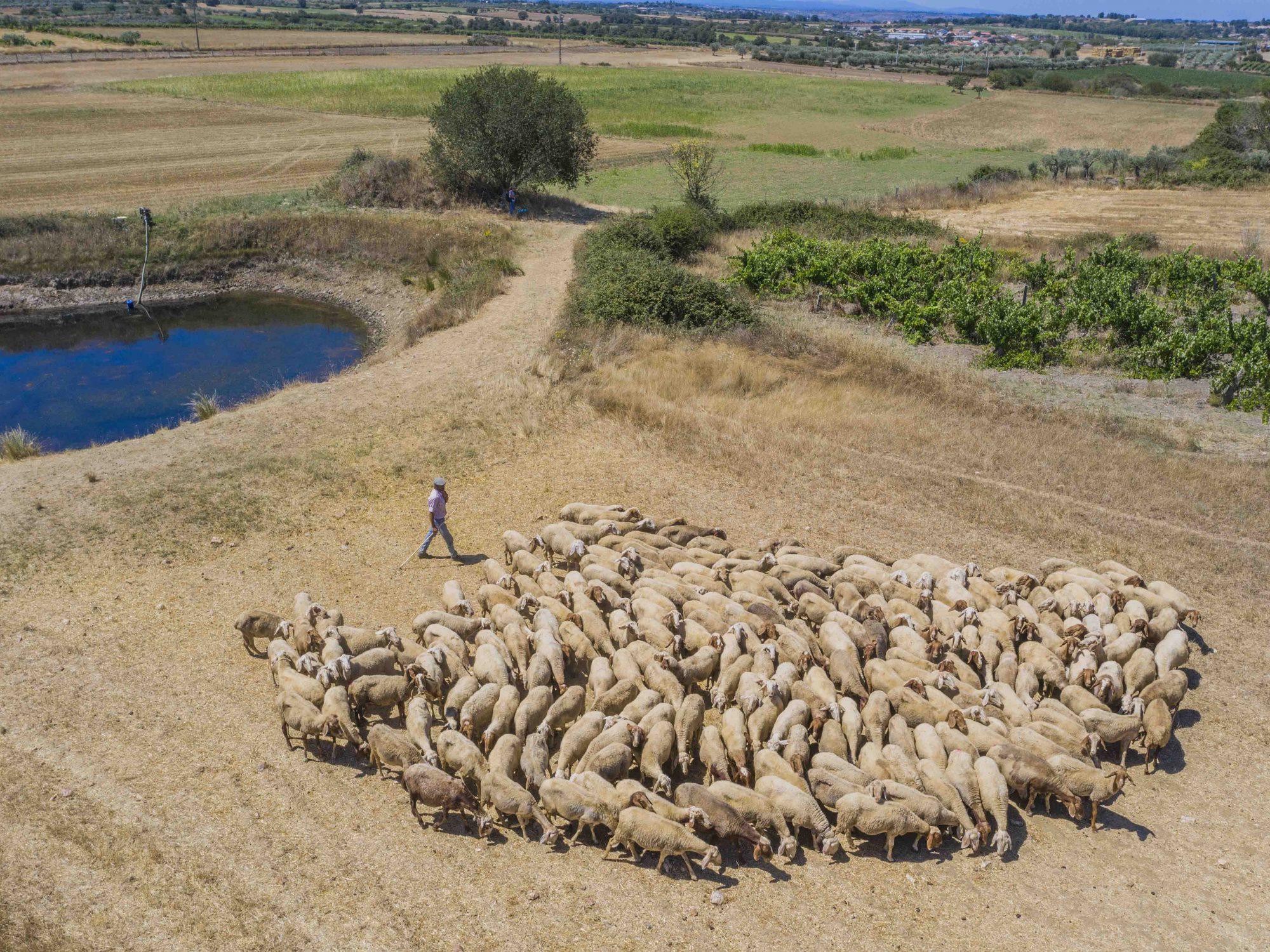 Shepherd Portugal